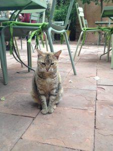 マジョレル庭園カフェにいつもいるネコちゃん