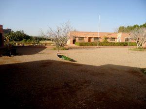 子供の通う学校には孔雀が放し飼いに
