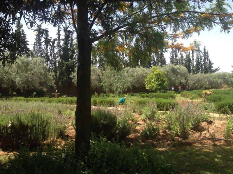jardinbio3.jpg