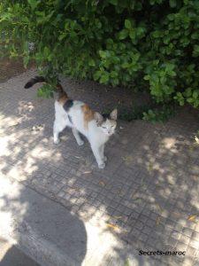 マラケシュの猫