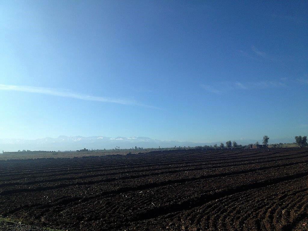 小麦が芽吹き始めた湿った大事と雪を頂くアトラス山