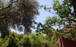 NECTAROME(ネクタローム)ウリカ庭園