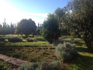 どこを撮っても絵になるこの庭園、だからカメラを押す手が止まらない…。