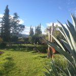 ある冬の朝のスナップat Nectaromeネクタロームビオガーデン
