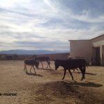 モロッコで厳しい環境を生きるロバの安息の地、Jarjeerサンクチュアリ訪問記