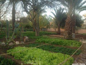 les deux toursでは有機野菜を自ら栽培…