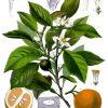 オレンジブロッサムウォーター&ローズウォーターの使い方、実際の使用感(by nectaromeネクタロム)