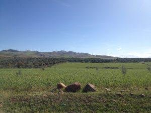 jarjeerからTahanoutに抜ける道の小麦畑