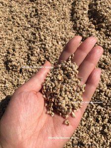 モロッコ産ウチワサボテン種子