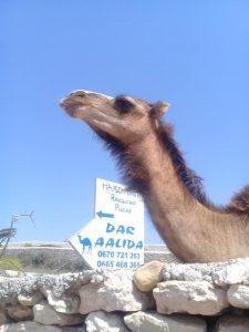 Dar Aalidaで飼われている(?)ラクダの子