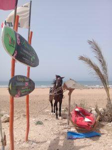 Sidi Kaoukiでレンタルボードをした店の馬は、パラソルを食いちぎり無残な姿に