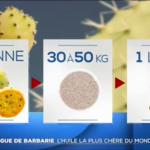 サボテンオイルの生産過程、相場がわかる動画です(byフランスTF1)